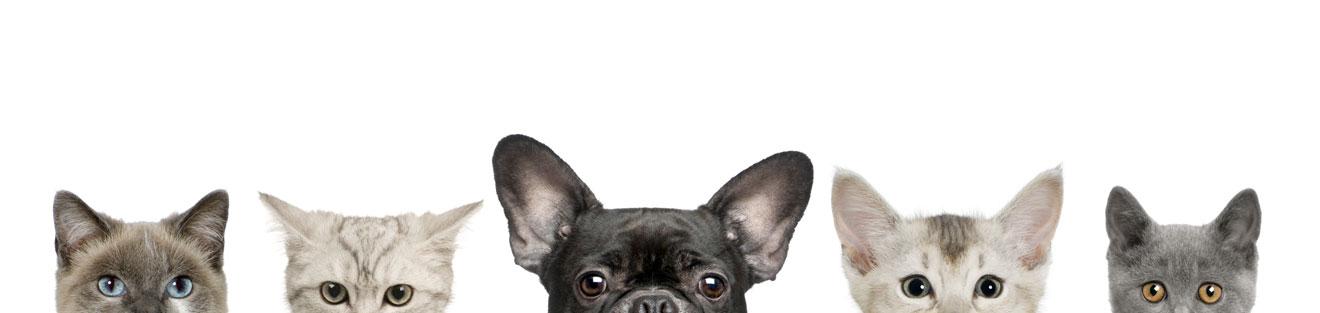 Footer Kontakt Gryffe Haustierservice